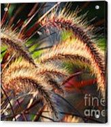 Grass Ears Acrylic Print