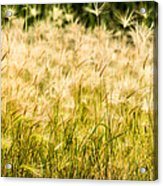 Grass Feathers Acrylic Print