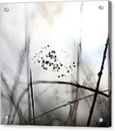 Grass Heavy With Raindrops Acrylic Print