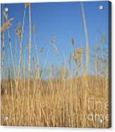 Grass In Motion Acrylic Print