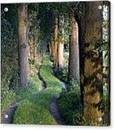 Grass Lane Acrylic Print