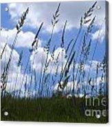 Grass Meets Sky Acrylic Print