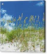 Grass On The Beach, Bill Baggs Cape Acrylic Print