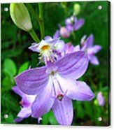 Grass Pink Orchid Acrylic Print