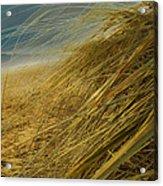 Grass To Sea Acrylic Print