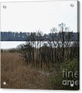 Grasses By The Lake Acrylic Print