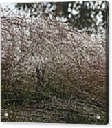 Grasses Glittering With Thousand Of Rain Drops Acrylic Print