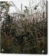 Grasses Glittering With Thousand Of Raindrops Acrylic Print