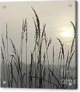 Grasses In Iceblue Landscape Acrylic Print