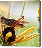 Grasshopper Antena Up Acrylic Print