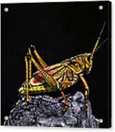 Grasshopper Portrait. Blue Cypress Lake Acrylic Print