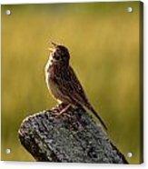 Grasshopper Sparrow Antietam Acrylic Print