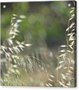 Grassland Acrylic Print