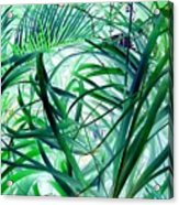 Grassy Glow  Acrylic Print