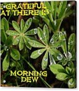 Grateful Dew Acrylic Print
