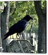 Graveyard Bird On Top Of A Tombstone Acrylic Print