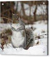 Gray Squirrel In Snow Acrylic Print