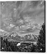 Gray Treetons Acrylic Print by Jon Glaser