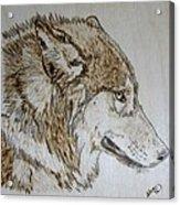 Gray Wolf Pyrographic Wood Burn Original 5.75 X 5.75 Inch Art Panel Acrylic Print