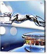 Grayhound Glamour Acrylic Print