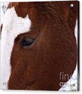 Grazing Horse  Acrylic Print by Kimberly Maiden