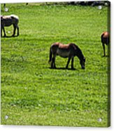 Grazing Horses Acrylic Print