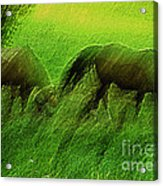 grazing Horses watercolor Acrylic Print