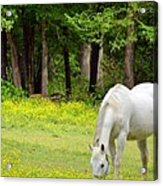 Grazing In Golden Fields Acrylic Print