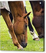 Grazing In Sync Acrylic Print