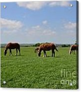 Grazing In The Field Acrylic Print