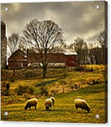 Grazing North South East And West Acrylic Print