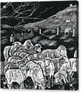 Grazing Sheep Acrylic Print