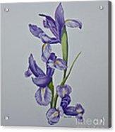 Grazioso - Graceful Acrylic Print