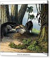Great Anteater Acrylic Print
