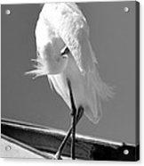 Great Beautiful Egret Acrylic Print