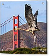Great Blue At The Golden Gate Acrylic Print