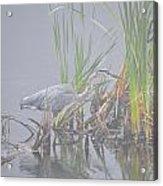 Great Blue Heron 3 Acrylic Print