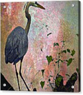 Great Blue Heron Among Cypress Knees Acrylic Print by J Larry Walker