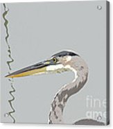Great Blue Heron And Rushes Acrylic Print