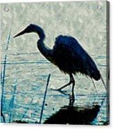 Great Blue Heron Fishing In The Low Lake Waters Acrylic Print