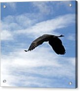 Great Blue Heron Flying Past The Clouds Above Trojan Pond 2 Acrylic Print