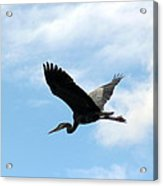Great Blue Heron Flying Past The Clouds Above Trojan Pond Acrylic Print