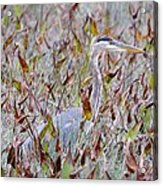 Great Blue Heron In Fall Marsh Acrylic Print