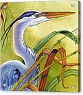 Great Blue Heron Acrylic Print by Lyse Anthony