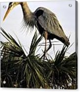 Great Blue Heron On Palm Acrylic Print