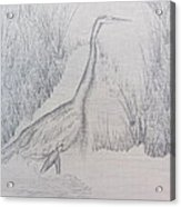 Great Blue Heron Pencil Drawing Acrylic Print by Debbie Nester