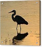 Great Blue Heron Reflected Acrylic Print