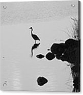 Great Blue Heron Silhouette Acrylic Print