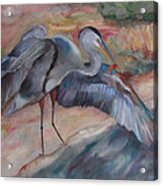 Great Blue Heron Acrylic Print by Susan Hanlon