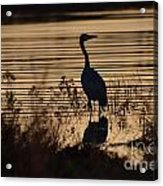 Great Blue Silhouette Acrylic Print